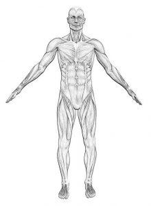 Anatomiekurse Privatarztpraxis Widenka